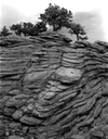 01 trees on contoured rock